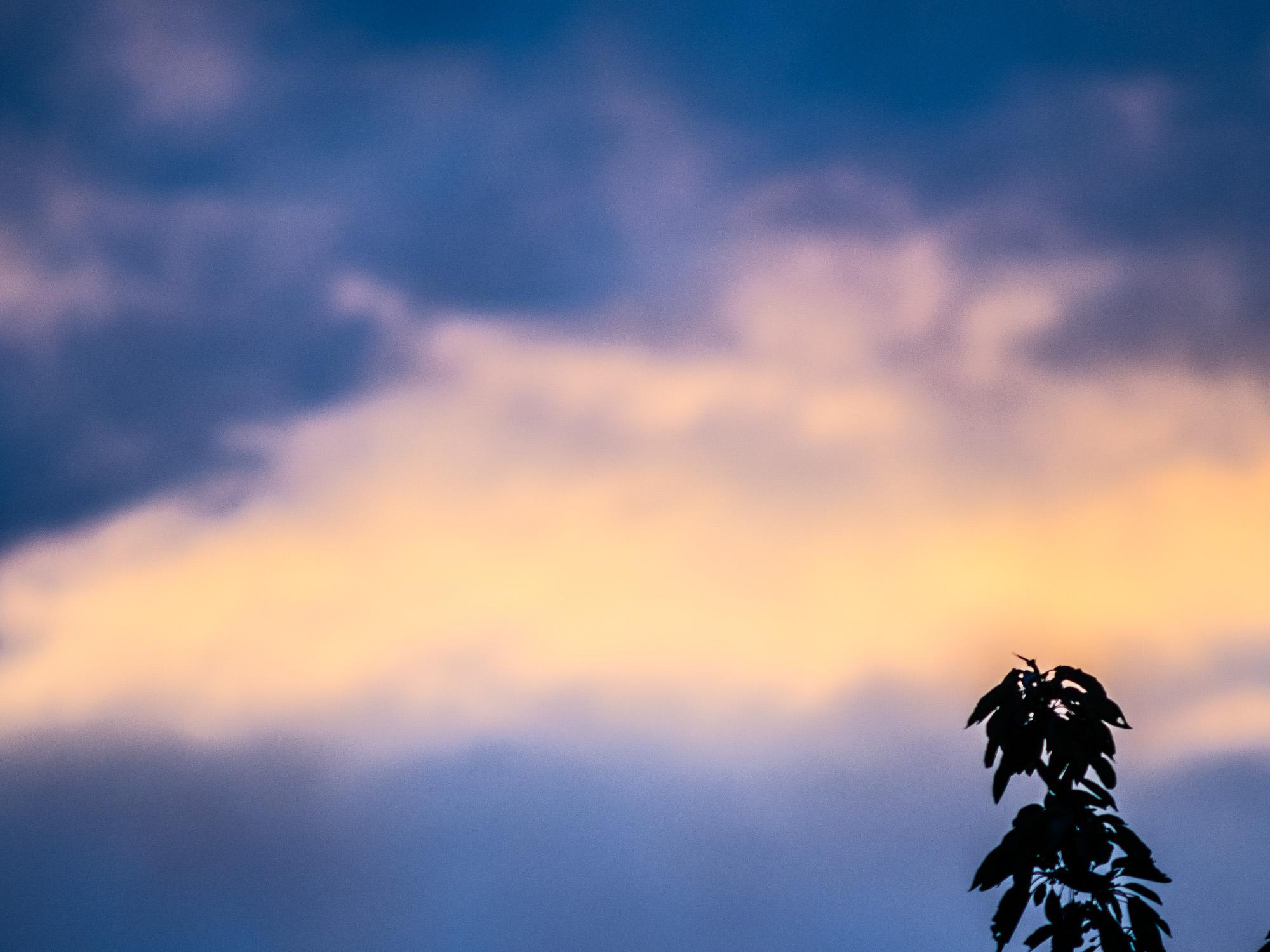Von der Sonne beleuchtete Wolke hinter einem Ast