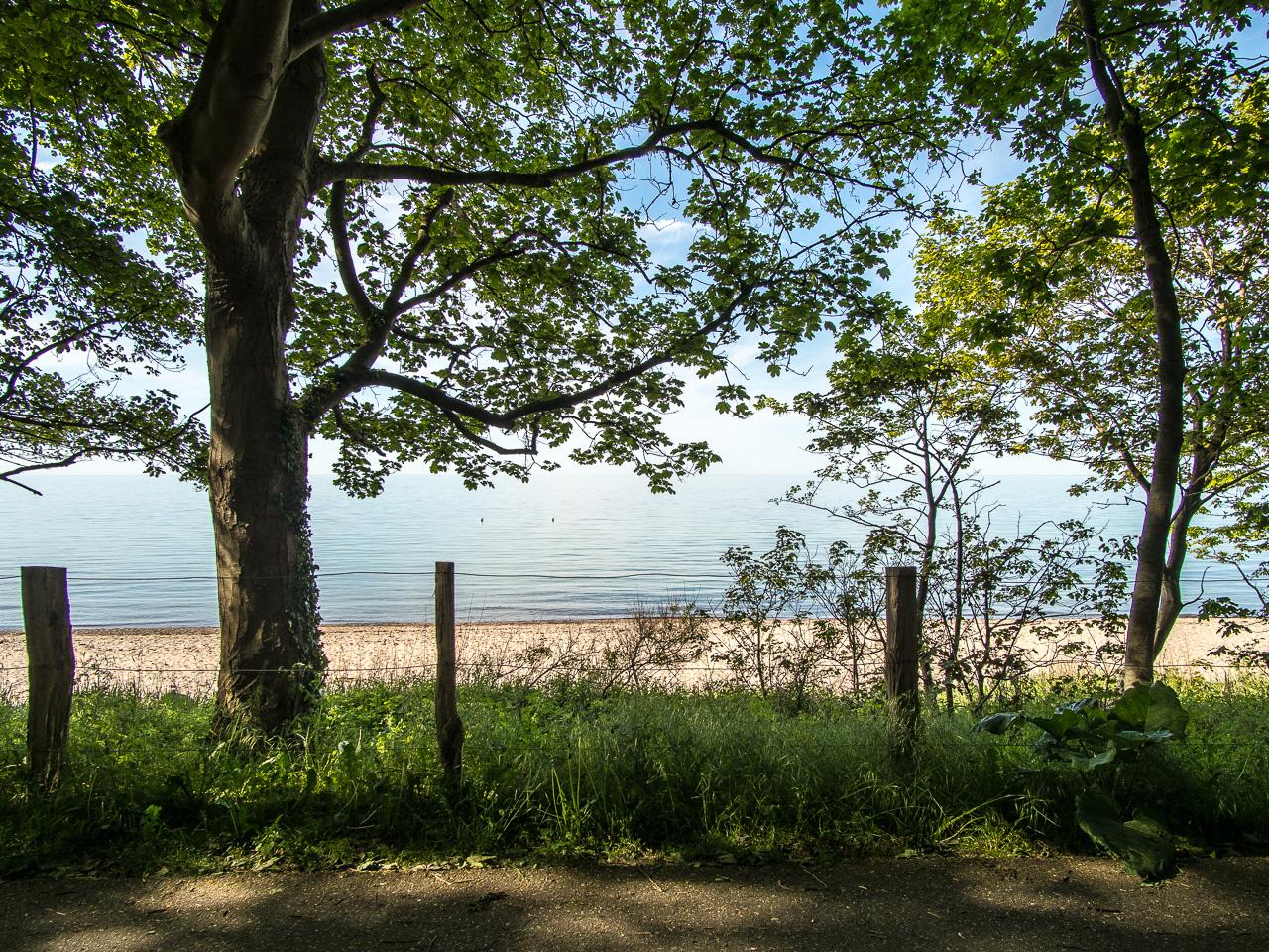 Zwischen den Bäumen der Strand bei Weißenhäuser Strand