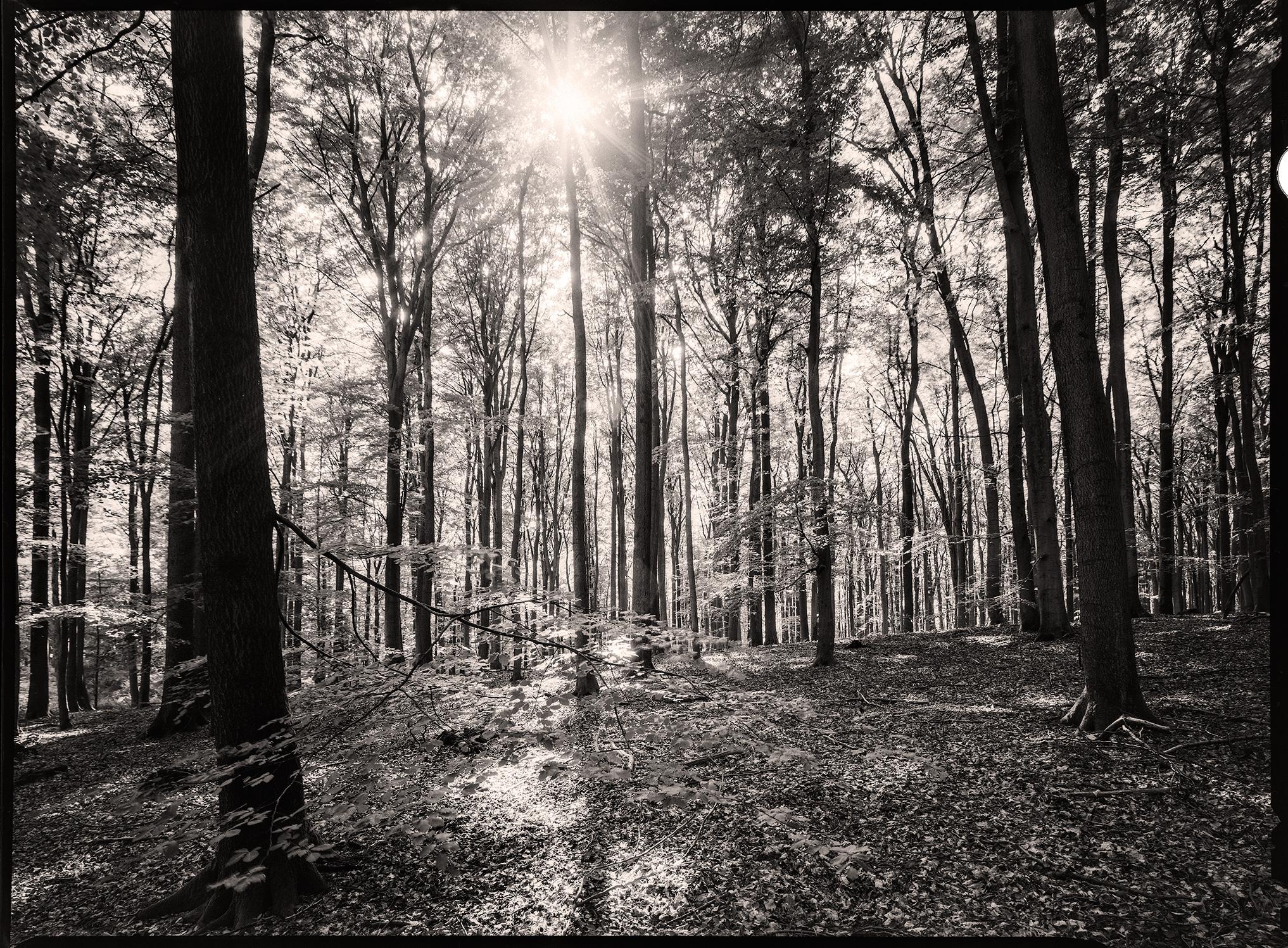 Wald in der Hahnheide, Gegenlicht mit Sonnenstern