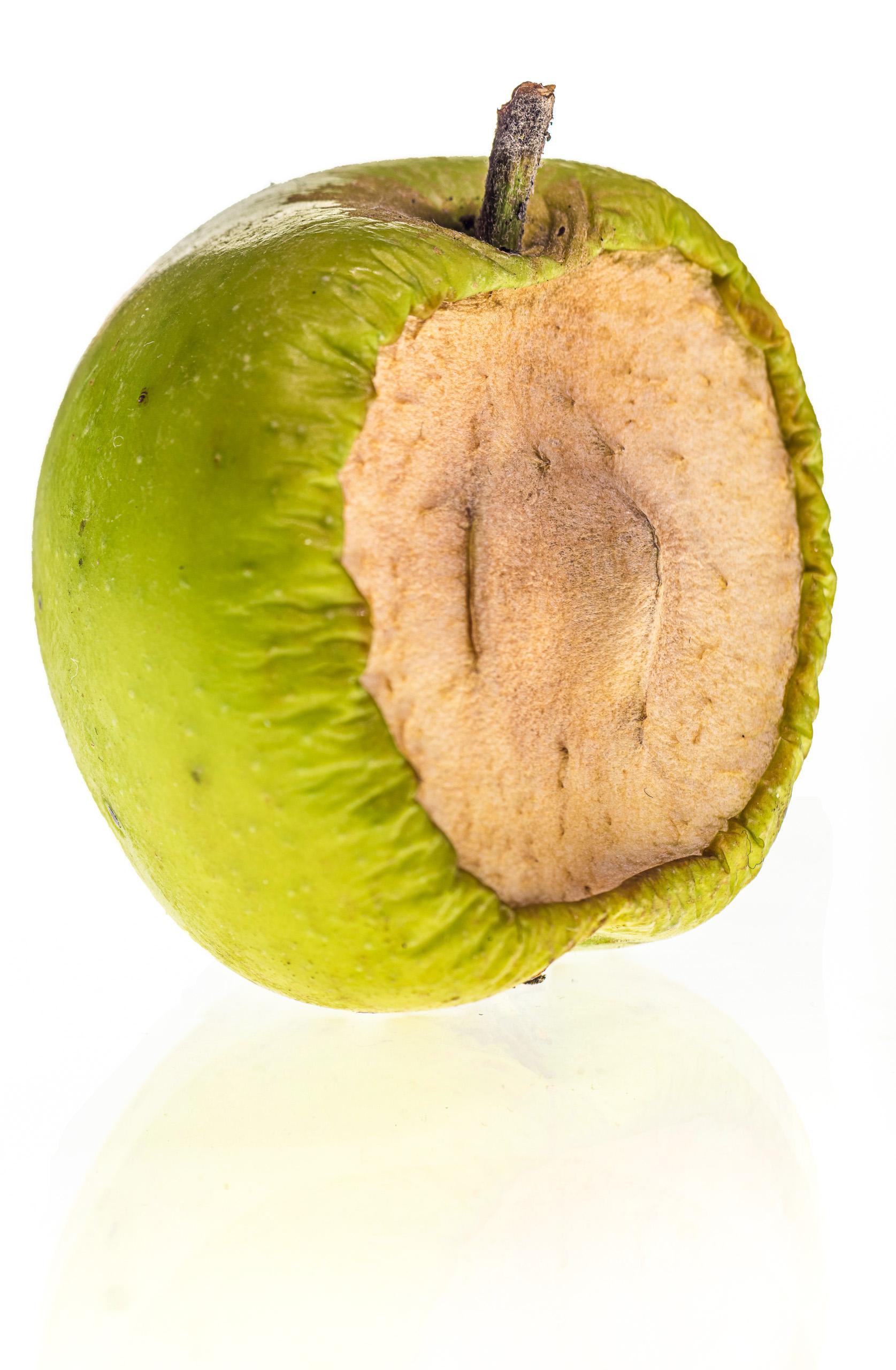 Apfel auf Leuchttisch, mit ausbleichender Spiegelung