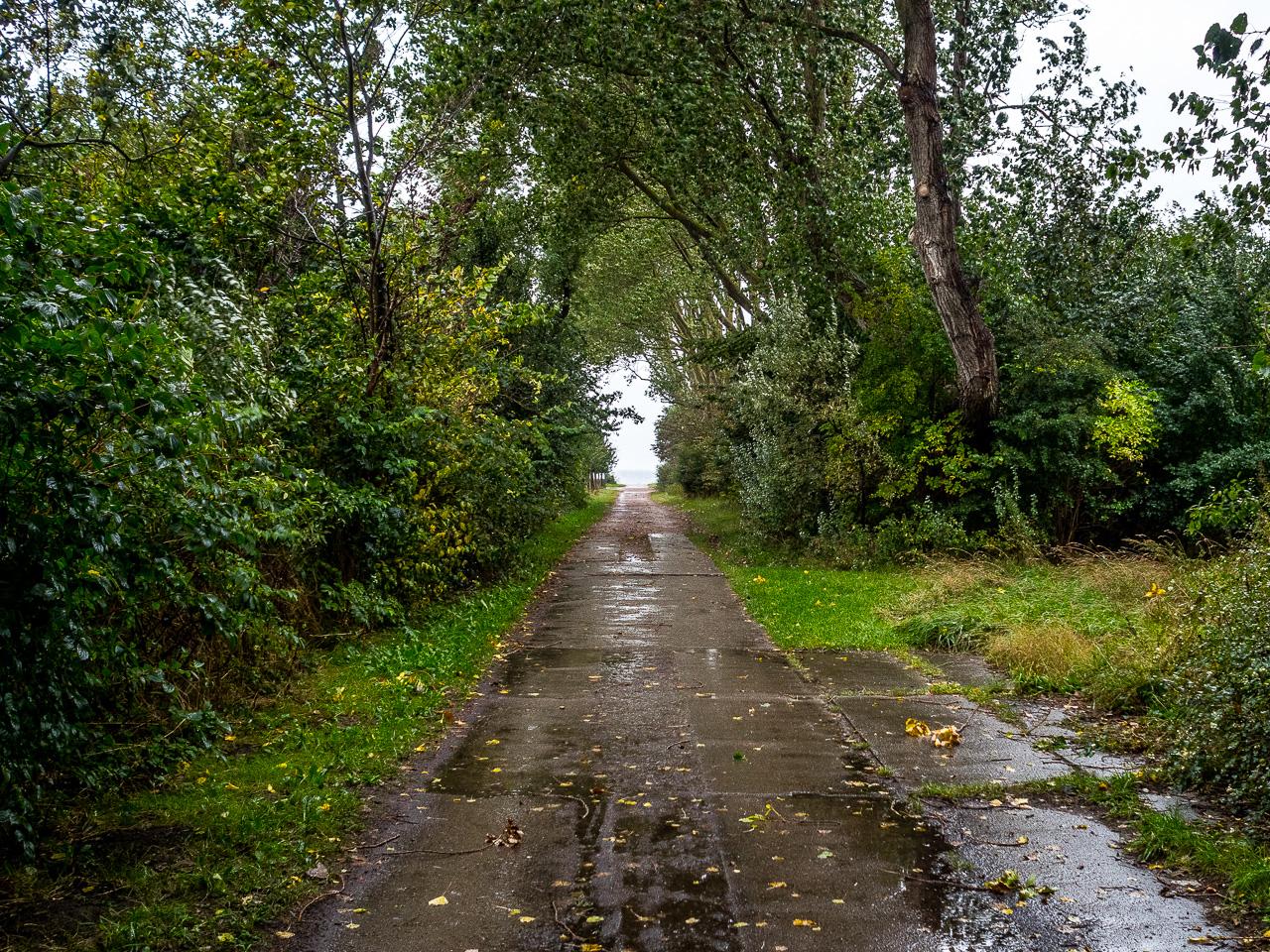 Weg zum Hochufer Ahrenshoop bei Regen