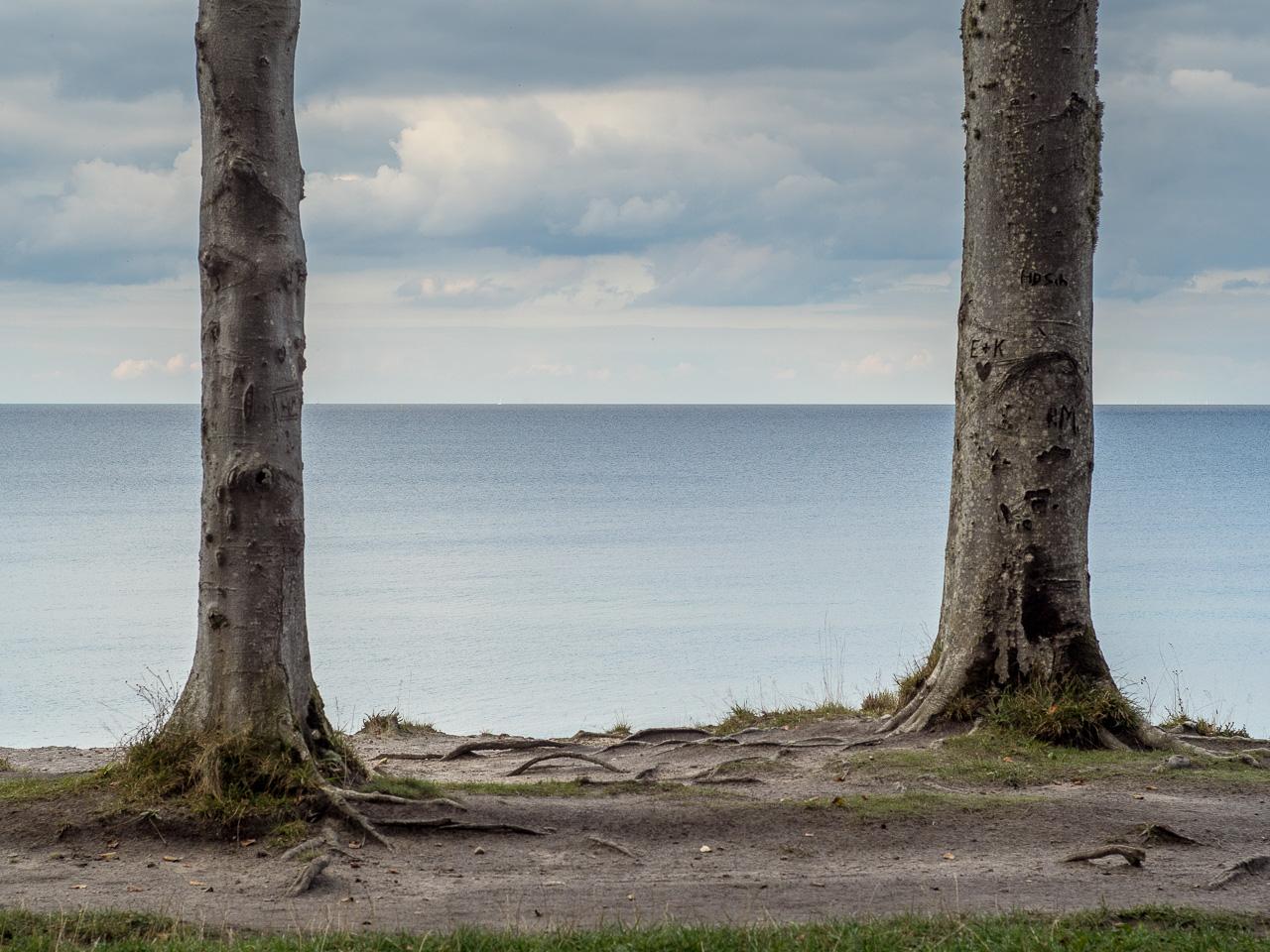Zwei Bäume vor der Wasserlinie
