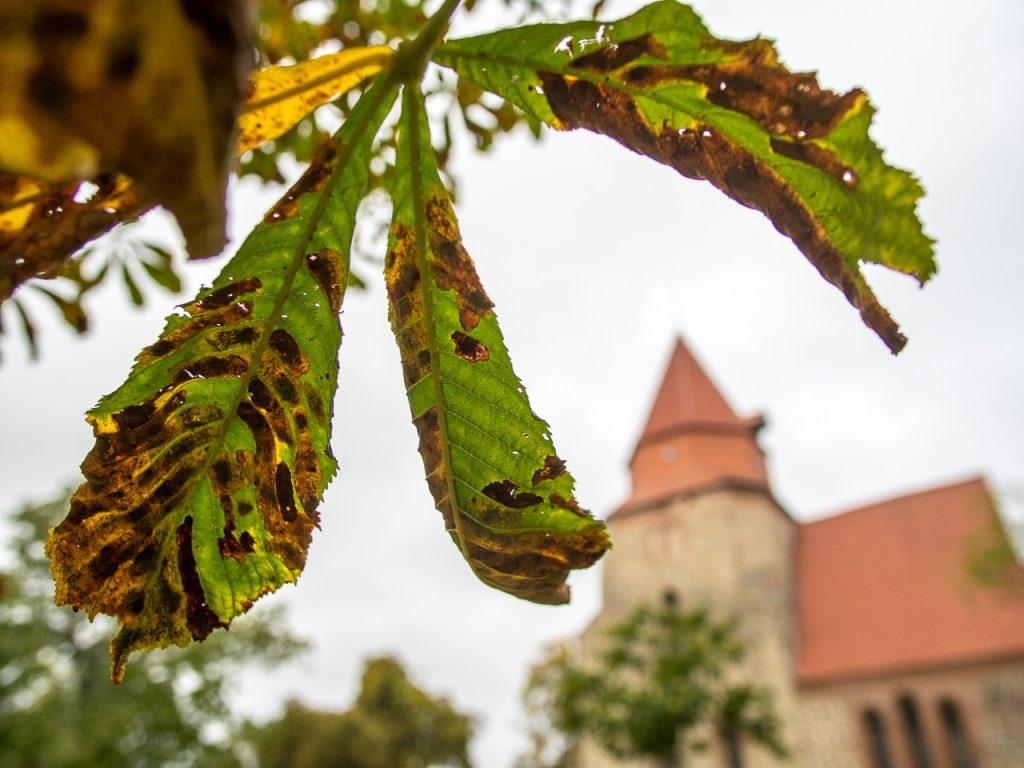 Dorfkirche Kavelstorf