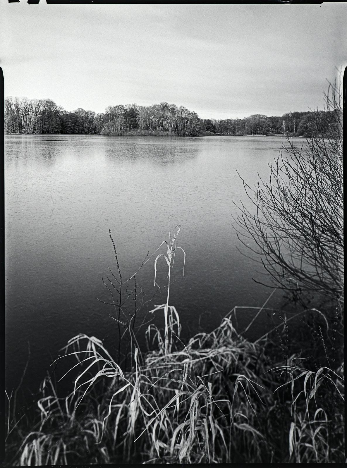 Hoisdorfer Teiche, Gräser im Vordergrund